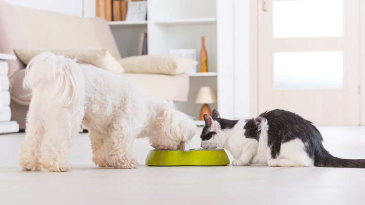 Dog and cat feeding from the same bowl. Comparis explains key aspects of pet insurance.